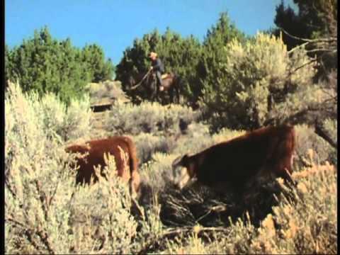 A Cowhand