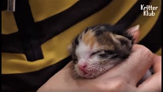 Mother Cat Had To Leave Her Precious Kitten At A Stranger's House, Because..(Part 1) | Kritter Klub