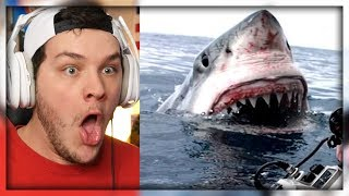 5 Horrifying Shark Encounters - Reaction