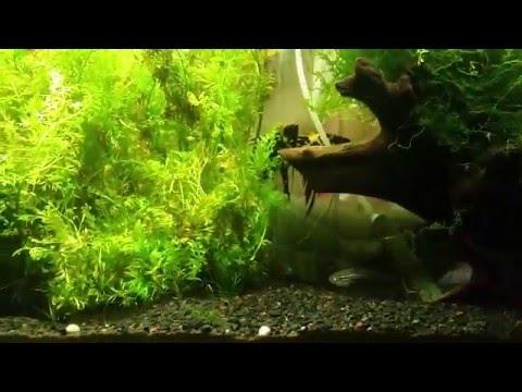 Aquascape / planted aquarium by beginner