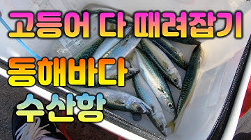 [바다낚시] 동해바다 고등어낚시 양양 수산항 찌낚시 영상 (fishing)
