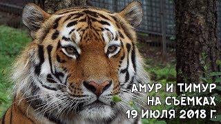 АМУР И ТИМУР НА СЪЁМКАХ 19 ИЮЛЯ 2018 Г.