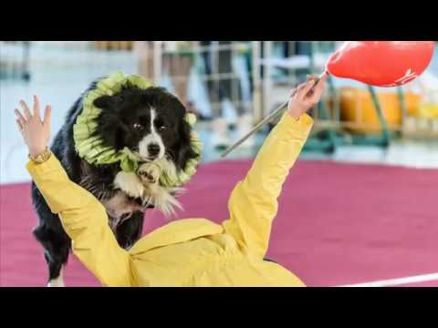 Caesar ~ Border Collie | III. Hatvani DaDo Dog Dancing Bajnokság