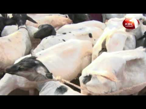 Laikipia County farmers urged to stock up in readiness for the dry season