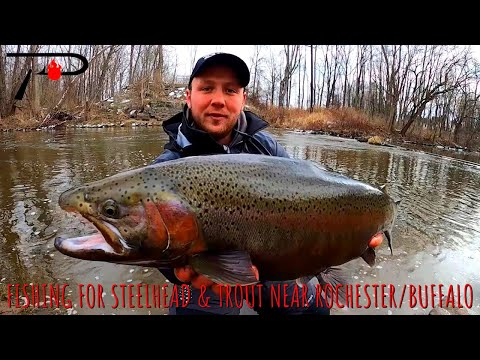 Fishing For Steelhead & Trout Near Buffalo & Rochester