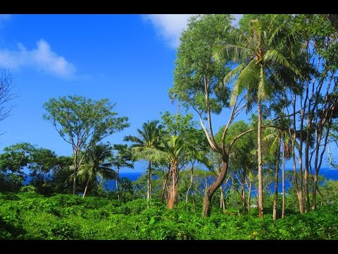 TROPICAL RAINFOREST SOUNDS - Ofu Island, American Samoa