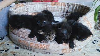 Младшие Котята ЗАМУЧИЛИ Старших Котят Смешные Коты И Кошки Приколы