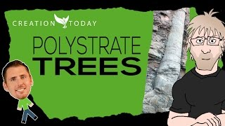 Creation Today Claims - Polystrate Trees