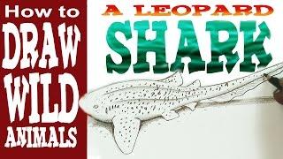 How to Draw a Shark - Leopard Shark (Beginner / intermediate)- Spoken Tutorial
