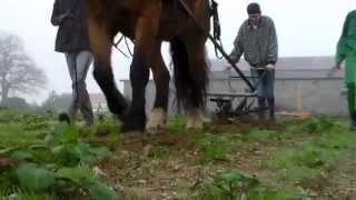 Salin traction animale Vendée