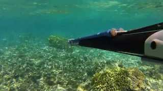 Guam spearfishing#1