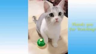 Funny cats and dogs  Funny Animals Compilation