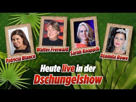 Jetzt live: Unsere Dschungelshow - mit mehr Stars als im Camp!