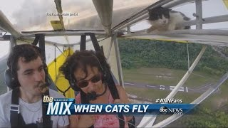 A Cat Goes Flying