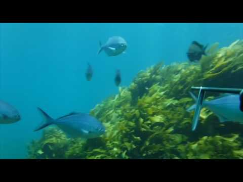 Spearfishing Bay Of Plenty NZ
