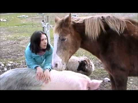 Petting a pig a horse and a sheep at the same time  YouTube