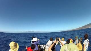 Maui Hawaii humpback whale watch tail show 2011 GoPro HD