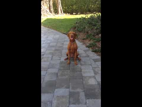 Off Leash Obedience Training - Miami & Ft. Lauderdale Certified Positive Dog Trainers