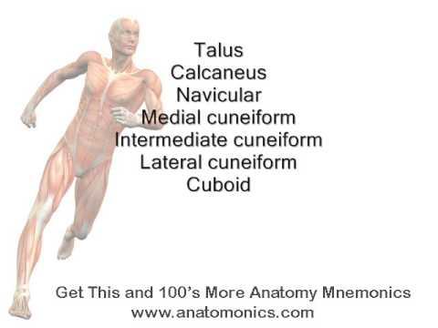 tarsal bones of ankle mnemonic - YouTube