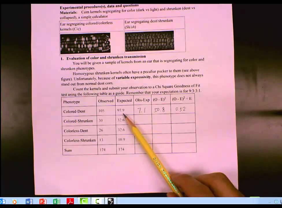 Biology 2 Lab 1 Mendelian Genetics For Segregation Of A Dihybrid Cross In Corn