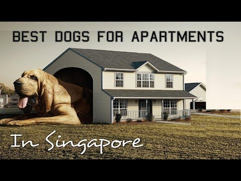 10 Best Dogs for apartments in Singapore