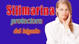 Silimarina Protectora Del Hígado - La Silimarina Del Cardo Mariano Es Buena Para El Higado