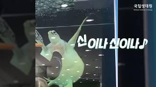 [국립생태원] 지금은 여수로 떠난 바다거북!