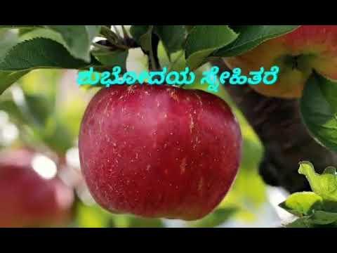 Download 900 Wallpaper Apple Good Morning HD Paling Baru
