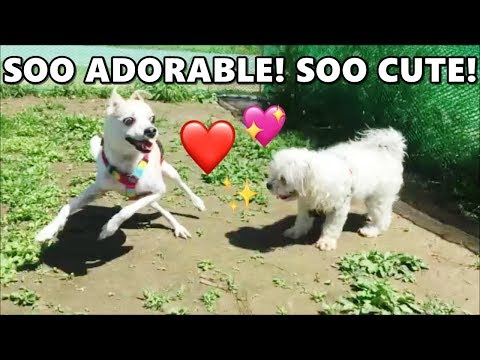 SO ADORABLE! CUTE DOGS HAVING SO MUCH FUN AT THE DOG PARK! | HAPPY DOGGY HAPPY