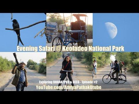 Evening Safari at Keoladeo National Park - Exploring Bharatpur & Deeg: Episode 2