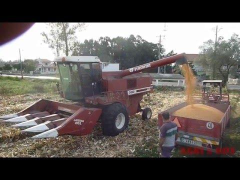Moisson  du maïs , avec Laverda  (2)