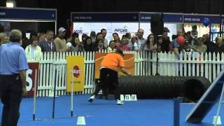 Sport News, Agility: Border Collie Jenga In Dog Agility Contest, South Africa