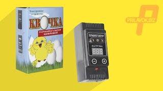 Терморегуляторы для инкубаторов Квочка, обзор