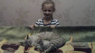 Про маленького котёнка, которого родила наша кошка.