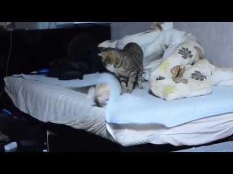 【捨て猫】干物猫ロビン,不意打ちに失敗して散る