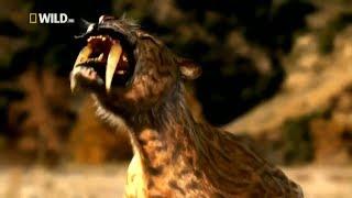 Фантастические фильмы  Древний дикий животный мир монстры Тигр  Prehistoric Tiger Nat Geo WILD 2017