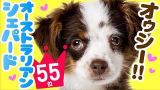 今回は、子犬の頃から美しい毛色と献身的な性格で、介助、救助、競技な...