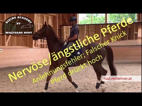 F29: Korrektur der Kopfhaltung! Anlehnungsprobleme korrigieren, Pferd mit falschen Knick korrigieren from YouTube · Duration:  21 minutes 21 seconds