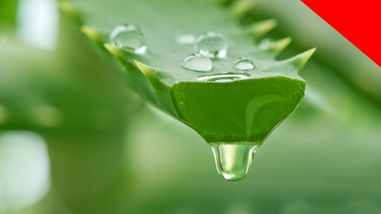 Aloe vera para gastritis