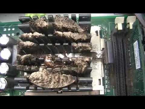 Cock Roaches Eating The Computer Screen Virus