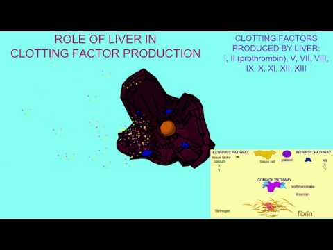 LIVER'S ROLE IN CLOTTING FACTOR PRODUCTION