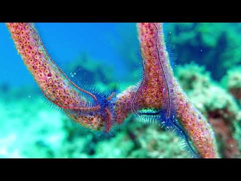 SCUBA Shack Travel | 2018 CoCo View Dive Resort Vacation - Roatan, Honduras