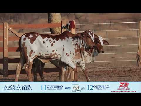 LOTE 246