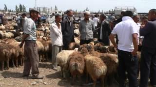 Le 5 août, Kashgar La foire aux bestiaux