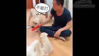 Собака не допустила избиения своих щенков, отобрав у хозяина тапок