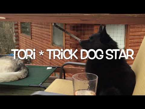 Tori trick dog title video