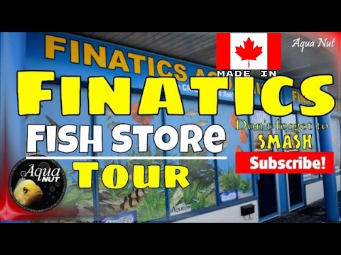 Fish Store Tour of Finatics Aquarium | Cichlid Fish Tank Shop Tour
