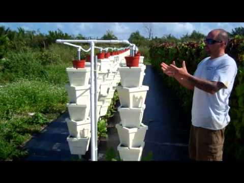The Hydroponic System