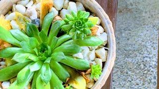 Muzica populara si muzica de petrecere 2020. Colaj muzica romaneasca cu formatia Basarabia.