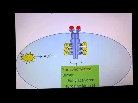 Receptor Tyrosine Kinase
